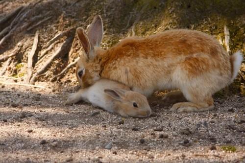 春先は子ウサギとの出会いも 子ウサギが生まれる春先はオススメの時期の一つだろう。記者が訪れた5月