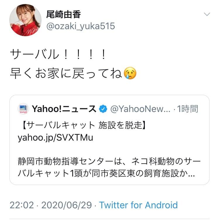 「けものフレンズ」でサーバル役の尾崎由香さん「サーバル!!!!早くお家に戻ってね」静岡でサーバルキャット脱走のニュースにツイート
