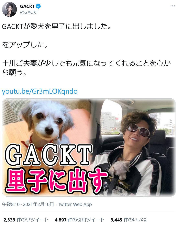 犬 gackt