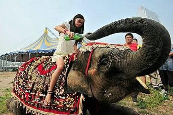 中国 青島国際ビール祭り