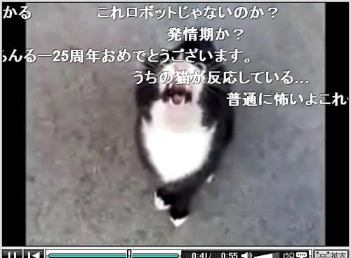 『怒ってた猫が急に話しかけて来たけど、ネコ語だからわからない』