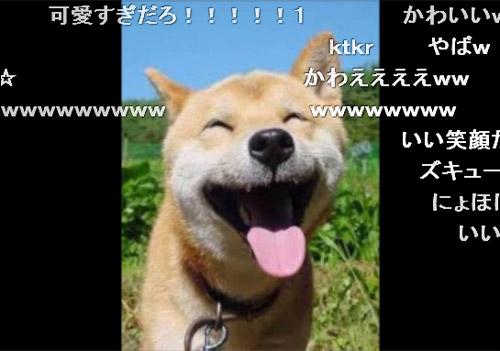動画共有サイト『ニコニコ動画』で、とある動物写真動画が人気を博していま... ニコニコした動物の