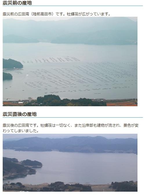 三陸沿岸牡蠣産地レポート-SAVE SANRIKU OYSTERより