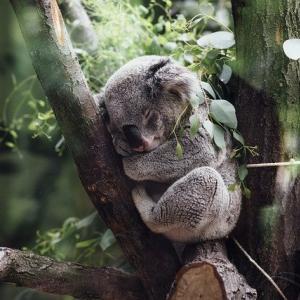 握力 コアラ
